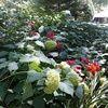 wearflowers714